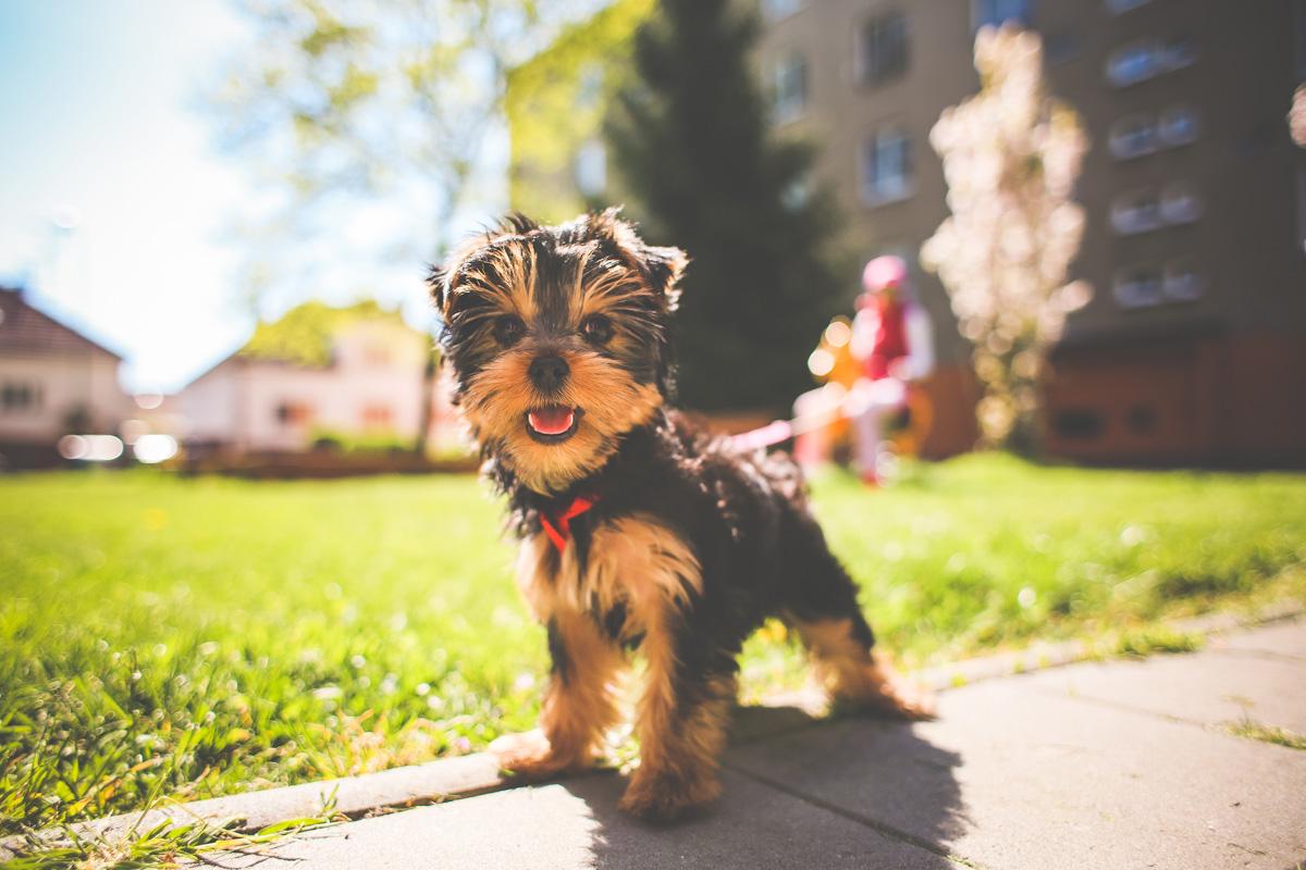 Jessie the Puppy